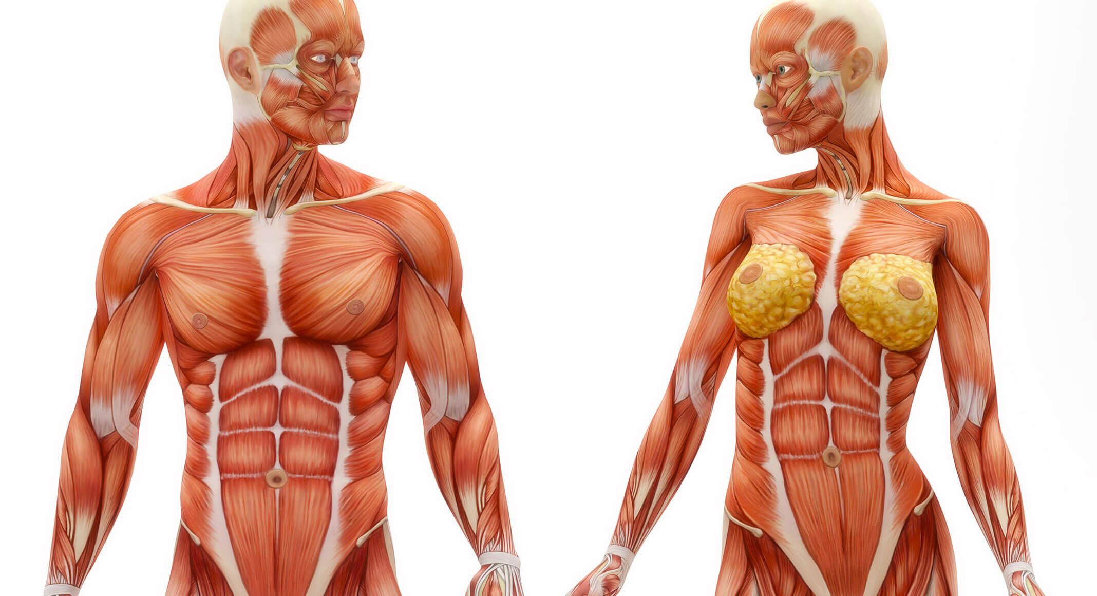 Faszien – mehr als nur Bindegewebe! - Das GesundheitsPlus