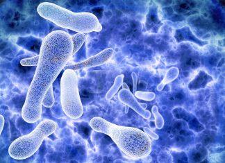 Legionellen-im-Trinkwasser-Keime-aus-dem-Wasserhahn