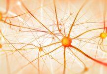Darmbakterien-Gehirnfunktionen-Darmflora-Denken-Fühlen-Emotion