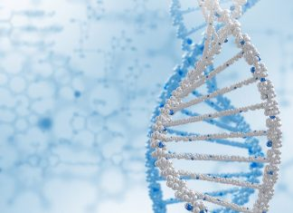 Nutrigenetik-Chromosom-snp-Gen